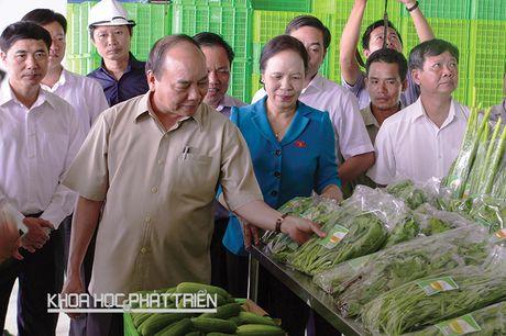 Thu tuong Nguyen Xuan Phuc: Nong nghiep cong nghe cao la huong di quan trong - Anh 1