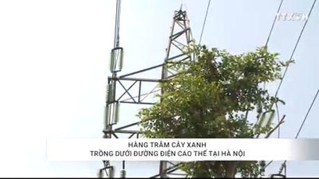 Hang tram cay xanh trong duoi duong dien cao the tai Ha Noi - Anh 1