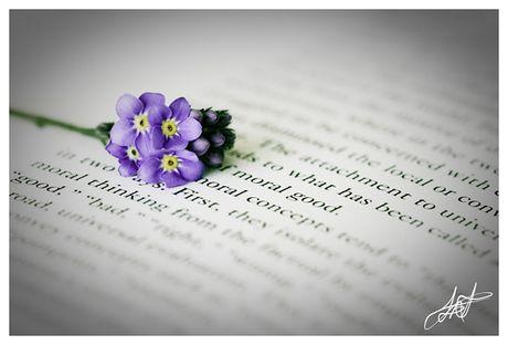 De my duc mai no hoa trong tam moi nguoi - Anh 2
