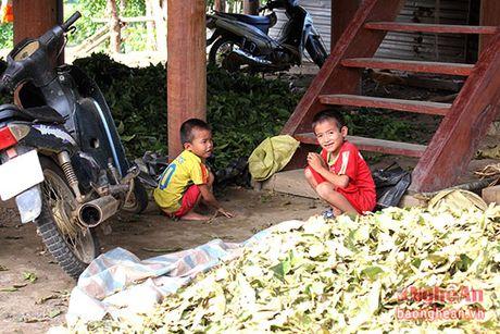 Nguoi dan mien Tay Nghe An tiep tuc hai la chua ke ban cho thuong lai - Anh 10