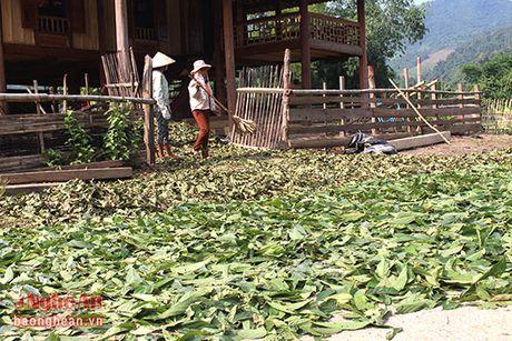 Nguoi dan mien Tay Nghe An tiep tuc hai la chua ke ban cho thuong lai - Anh 12