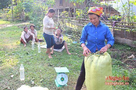 Nguoi dan mien Tay Nghe An tiep tuc hai la chua ke ban cho thuong lai - Anh 5