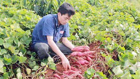 Nha nong Nam Trung Bo chua man ma san xuat sach - Anh 1