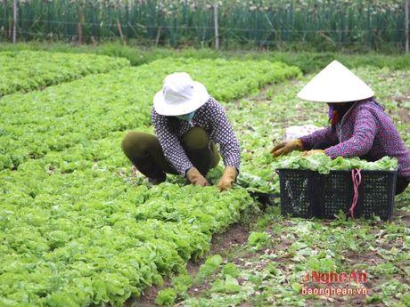 Nghe An: 74% HTX nong nghiep chuyen doi hoat dong - Anh 1