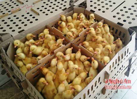 Gan 5000 gia cam khong ro nguon goc tren xe khach Bac - Nam - Anh 2