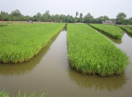Dong bao Khmer cung chung tay gop suc xay dung que huong - Anh 3