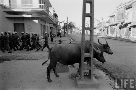 Tan muc linh Phap cuon co rut khoi Ha Noi nam 1954 - Anh 10