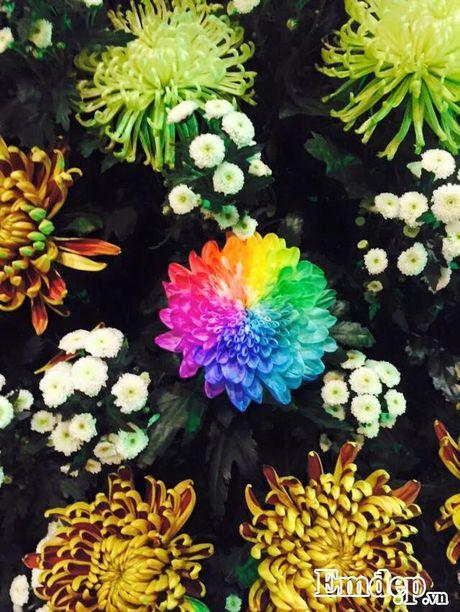 Den chua Ba Vang thuong ngoan hoa cuc 7 mau - Anh 8