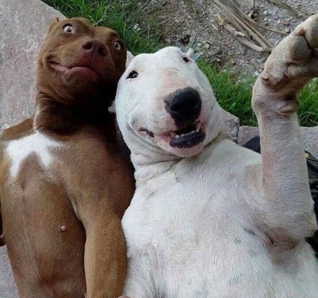 20 buc anh selfie noi tieng khap the gioi - Anh 3