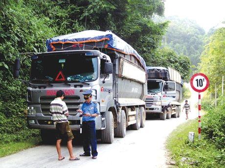 CSGT Binh Dinh xu phat hang chuc xe 'co ngon' - Anh 1