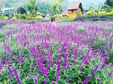 Ve Lao Cai ngan ngo sac tim oai huong - Anh 6