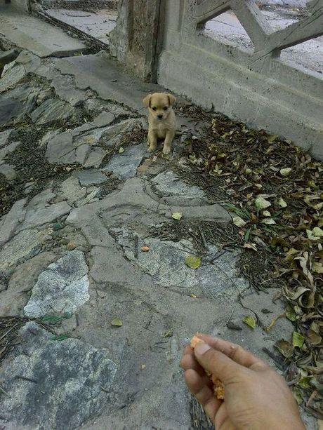 Su that roi nuoc mat dang sau viec chu cho nho lien tuc chay di xin an - Anh 1