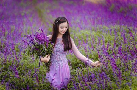 Hoa Oai huong nhuom tim thung lung Bac Ha - Anh 8