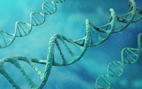 Phat hien gen ngan chan su phat trien cua benh Alzheimer - Anh 1