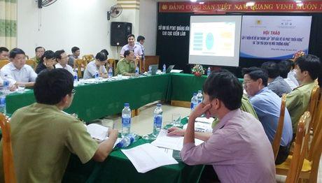 Quang Binh: Xa hoi hoa bao ve va phat trien rung - Anh 1