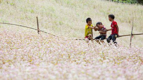 6 dia diem san hoa tam giac mach ly tuong nhat tai Ha Giang - Anh 1