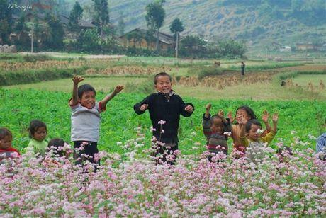 6 dia diem san hoa tam giac mach ly tuong nhat tai Ha Giang - Anh 4