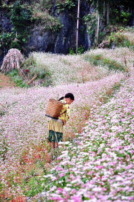 6 dia diem san hoa tam giac mach ly tuong nhat tai Ha Giang - Anh 5