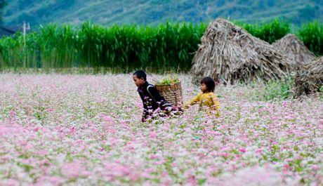 6 dia diem san hoa tam giac mach ly tuong nhat tai Ha Giang - Anh 6