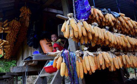 Thu sang, mien son cuoc Mu Cang Chai dep den nao long - Anh 11