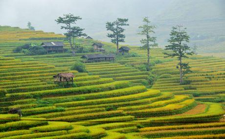 Thu sang, mien son cuoc Mu Cang Chai dep den nao long - Anh 1