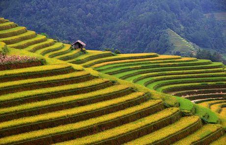 Thu sang, mien son cuoc Mu Cang Chai dep den nao long - Anh 2