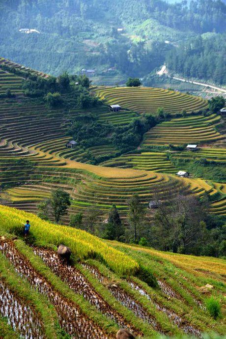 Thu sang, mien son cuoc Mu Cang Chai dep den nao long - Anh 4
