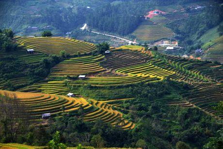 Thu sang, mien son cuoc Mu Cang Chai dep den nao long - Anh 5