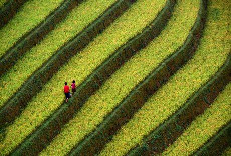 Thu sang, mien son cuoc Mu Cang Chai dep den nao long - Anh 7