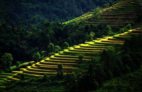 Thu sang, mien son cuoc Mu Cang Chai dep den nao long - Anh 8