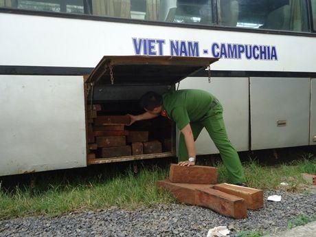 Dak Nong: Bat xe khach cho go lau xuyen tinh - Anh 2