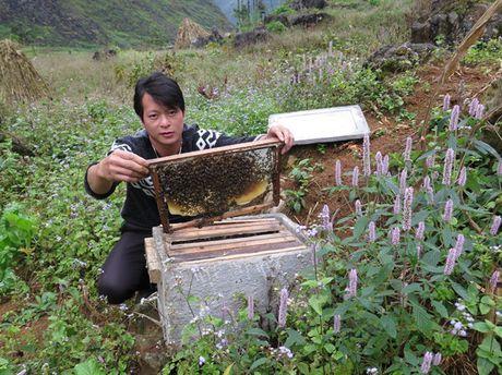 Mat ong bac ha Ha Giang: Bao ve thuong hieu bang cach nao? - Anh 1