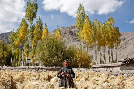 Cuoc song o vung dat 'Tieu Tay Tang' tren nui Himalaya - Anh 3