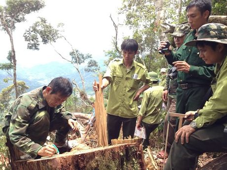 Vu khai thac go po mu tai Khu Bao ton thien nhien Pu Hoat (Nghe An): Khoi to doi tuong don ha po mu - Anh 2