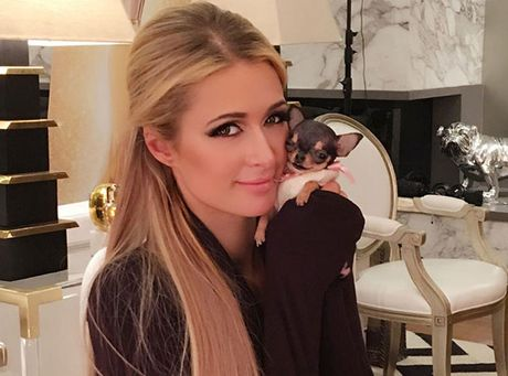 Paris Hilton bo 8.000 USD mua cun cung be bang tach tra - Anh 1