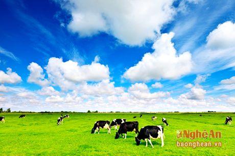 Khoe dep voi thuc pham Organic cao cap - Anh 3