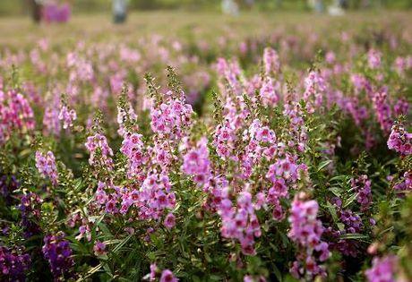 Kham pha thao nguyen hoa giua long Ha Noi - Anh 1