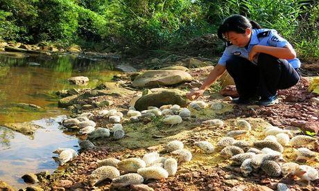 Trung Quoc phong sinh 60 con nhim gai buon lau tu Viet Nam - Anh 3