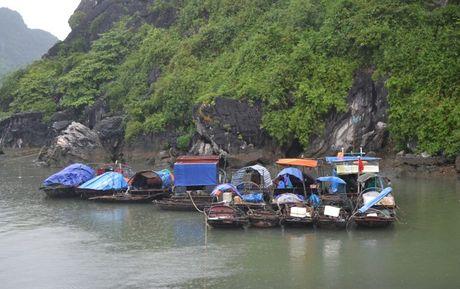 Quang Ninh khan truong trien khai cac bien phap ung pho bao so 7 - Anh 1