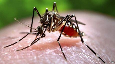 Phat hien muoi tai Viet Nam nhiem vi rut Zika - Anh 1