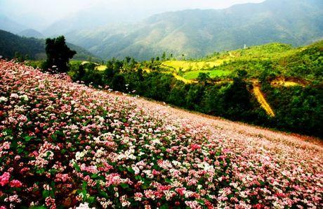 Thung lung Sung La - Noi da no hoa - Anh 1