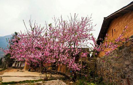 Thung lung Sung La - Noi da no hoa - Anh 3