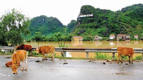 Quang Binh menh mong bien nuoc, giao thong chia cat - Anh 7