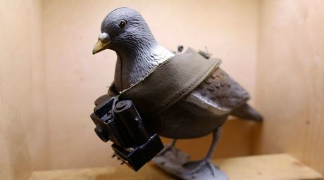 An Do thu giu hon 150 con chim bo cau bi nghi lam gian diep cho Pakistan - Anh 1