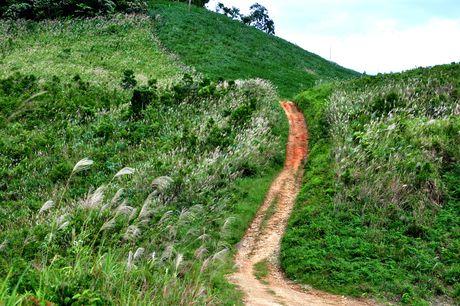 Ve dep hoang so o day nui cao nhat Quang Ngai - Anh 10