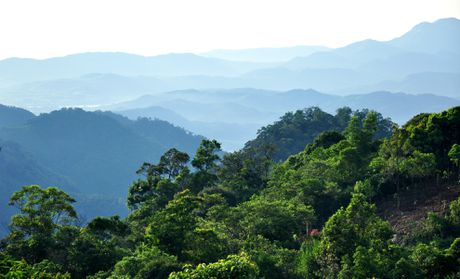 Ve dep hoang so o day nui cao nhat Quang Ngai - Anh 1