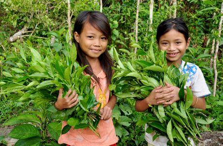 Ve dep hoang so o day nui cao nhat Quang Ngai - Anh 4