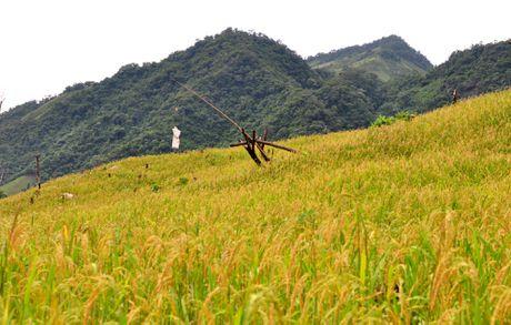 Ve dep hoang so o day nui cao nhat Quang Ngai - Anh 9
