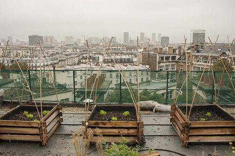 Thu do Paris: Nguoi dan trong cay quanh thanh pho - Anh 6