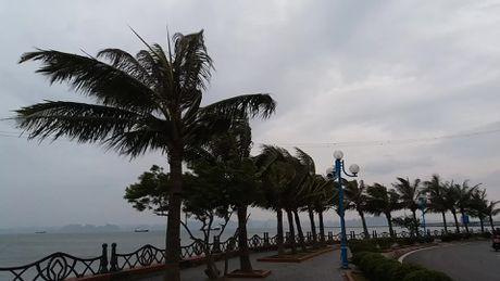 Bao so 7: Quang Ninh da co mua va gio giat manh - Anh 18